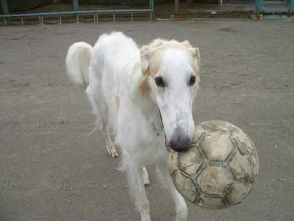 06526footballboy1